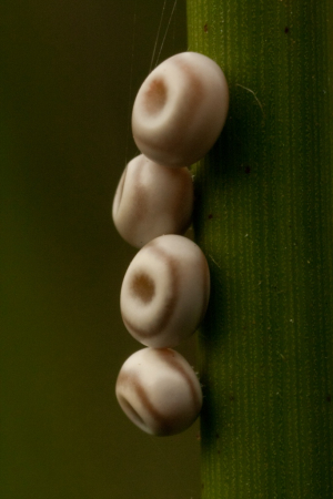 Unknown eggs