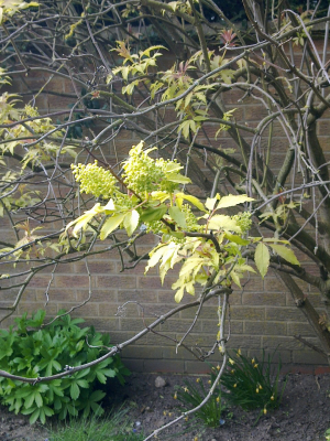 Tree in my back garden