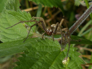 Spider for ID please.