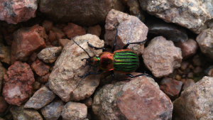 small green beetle