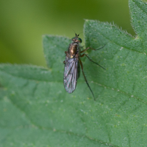 small fly 3