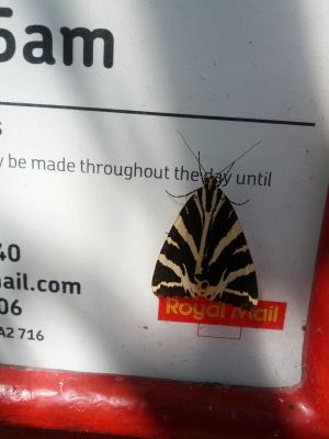 Moth on post box