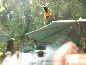 Type of wasp?  Ichneumon?