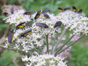 unknown insects