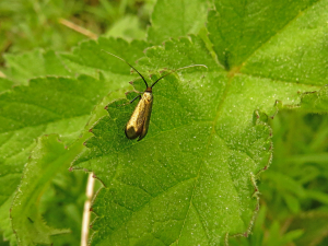 Image 2050 Unknown Beetle(?)