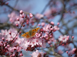Butterfly and Blossom.