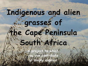 Grasses of the Cape Peninsula