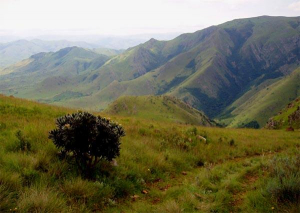 The Biodiversity of the Barberton Greenstone Belt (South Africa and Swaziland)