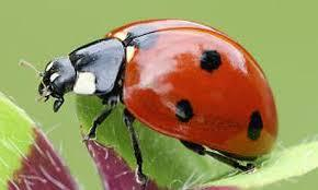 where ar e all the ladybirds?