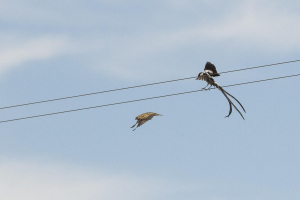 Love on the wires