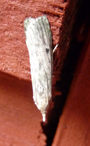 Moth 1 second attempt