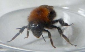 Bee in my kitchen