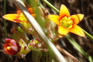 Tiny orange and yellow flowers