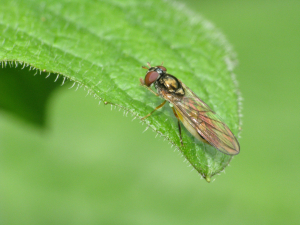 small long fly