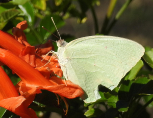 Flower visited by white butterfly