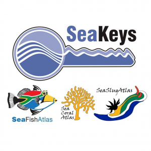 IDs needed for SeaKeys observations