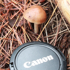 Single Brown Mushroom
