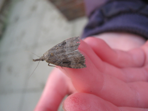 rescued moth