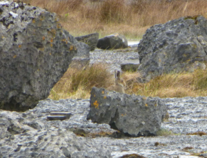 I don't think he can see me behind this rock... Oh yes he can