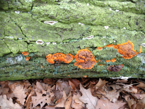 fungus on log