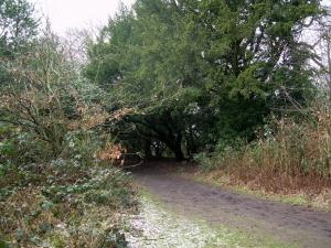 CHILDWALL WOODS AND FIELDS
