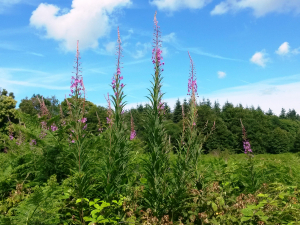 Flowering plants at King's Meadow & adjoining woodland