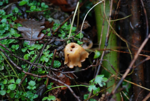 Unknown Euxton fungus 2
