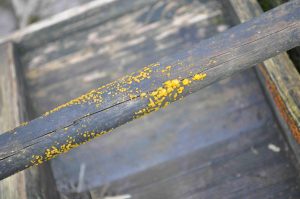 spotty yellow trug handle fungus