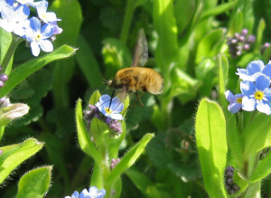Is this a bee-fly?