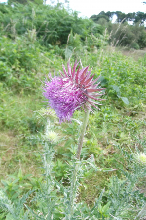 Thistle Hartlebury 9.7.14