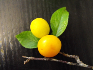 Yellow Sloe type fruit
