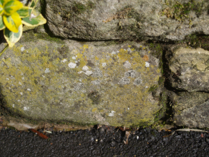 assorted lichen on dry stone wall