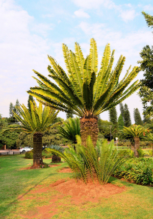 Jan Celliers Park, Pretoria