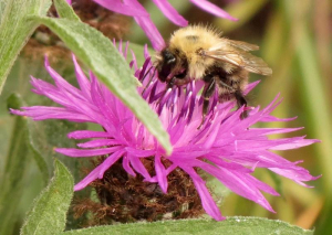 Bee sp1 2013-07-17 Foxton