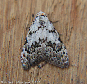 Least-Black-Arches