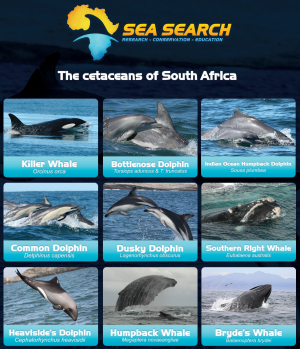 Cetacean Sightings South Africa
