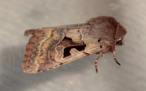 Hebrew Character.