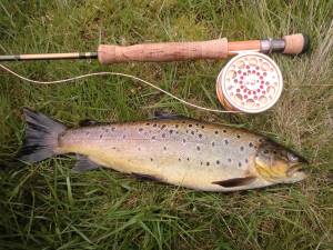 Brown Trout containing Orchid Beetle among other things..