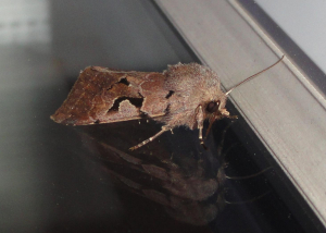 Hebrew Character