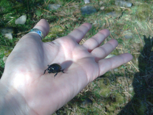 Unidentified beetle found on Dartmoor