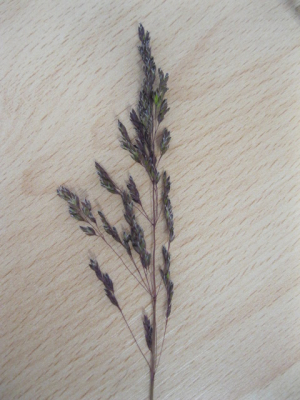 Purple chalk grassland species