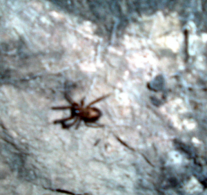 Is this a cave spider?