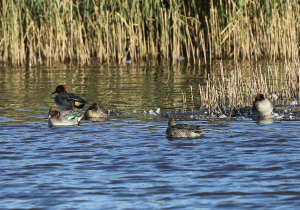 Nice Group of Teal