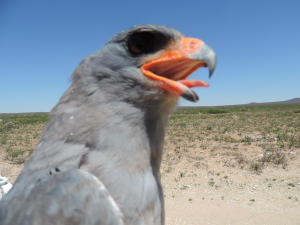 Raptor Project in the Karoo
