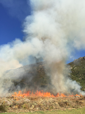 Experimental Application of Fire in the Selection Bed