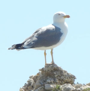 Gull on holiday