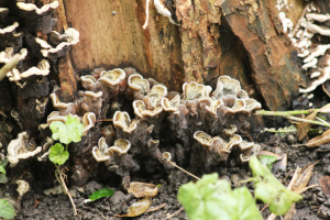 fungus-unknown