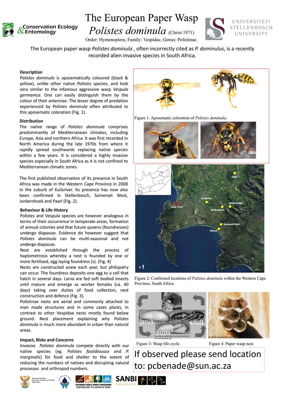The European Paper Wasp Brochure.jpg
