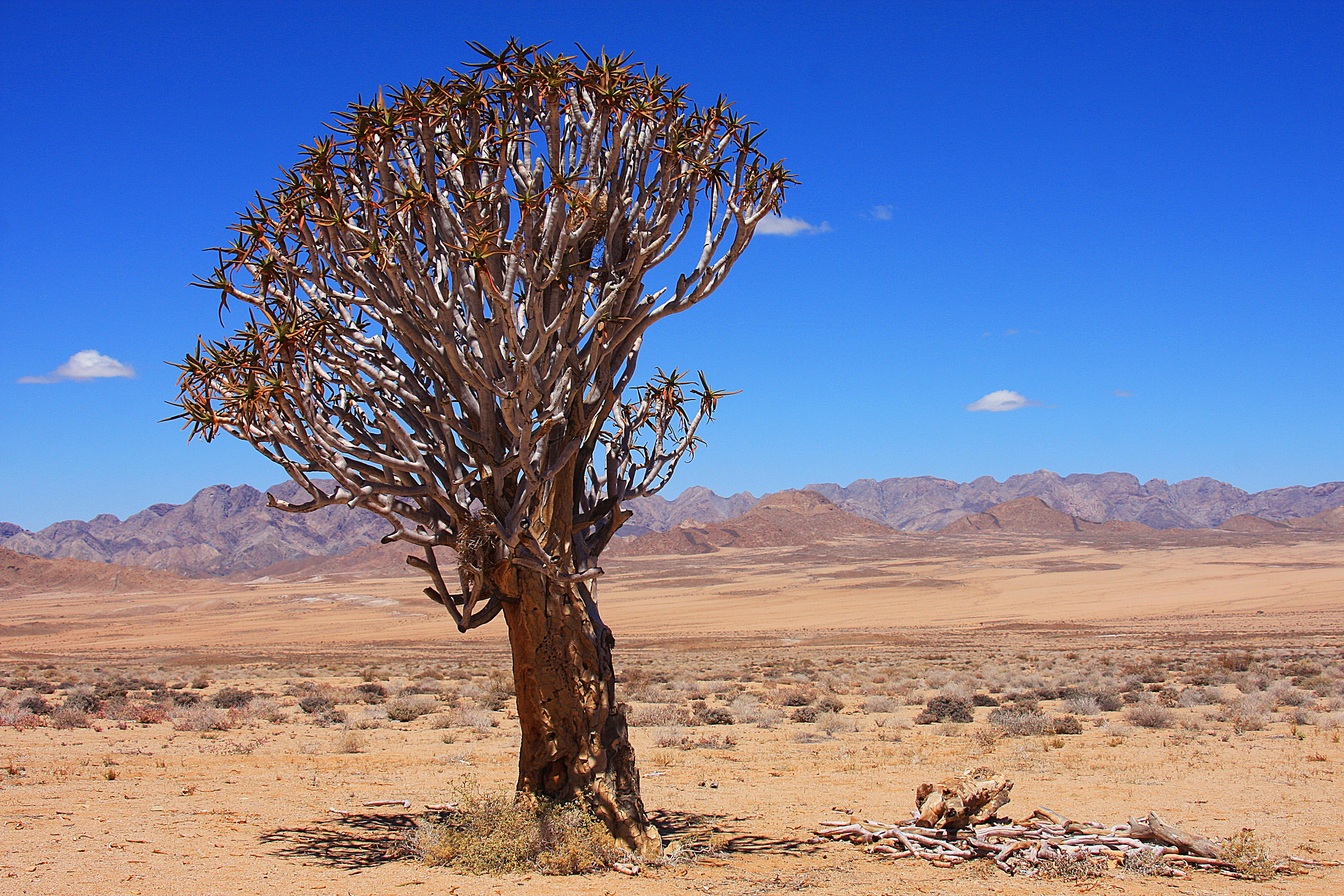 Option 6: Quiver Tree Bhekisisa