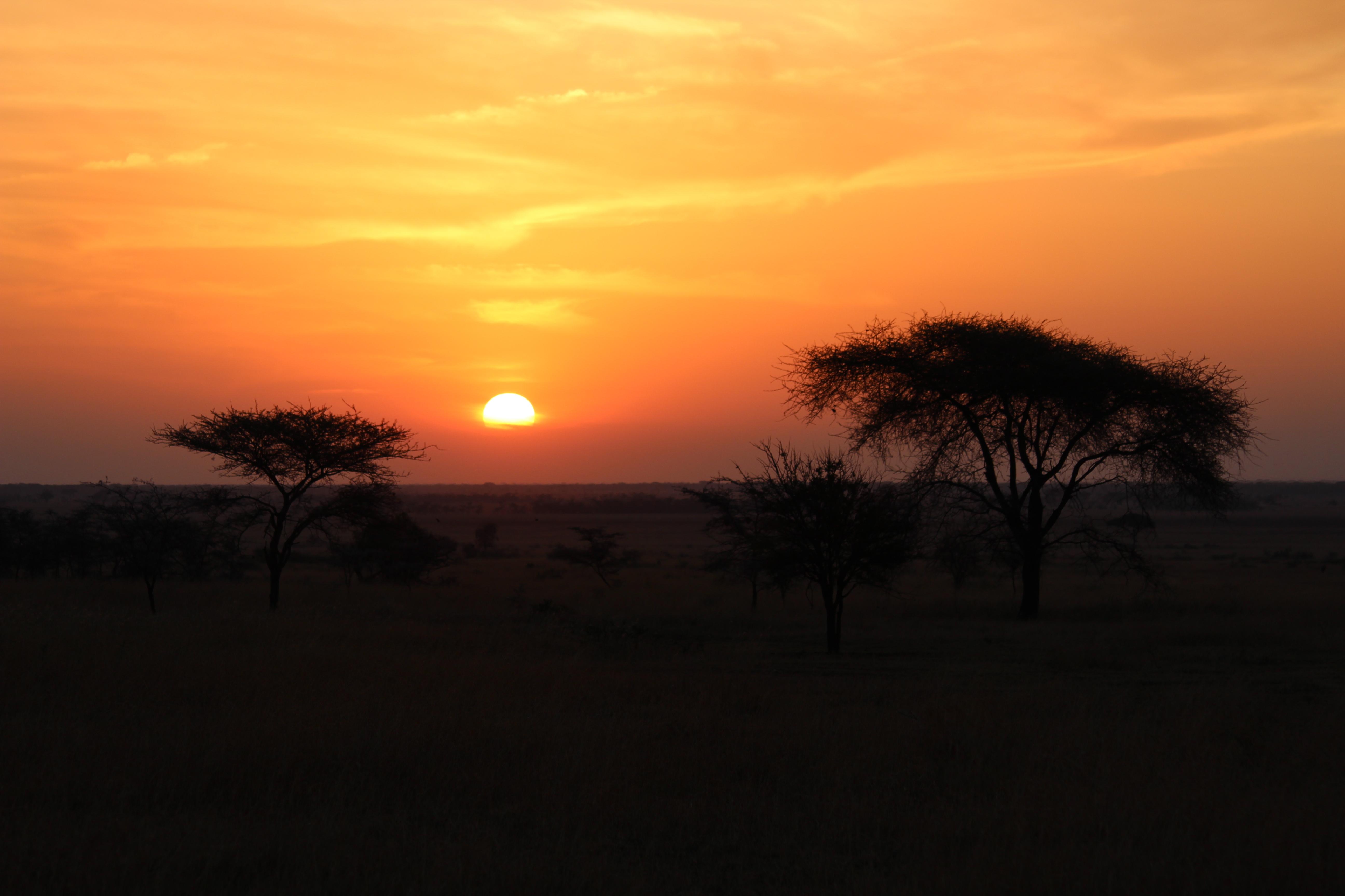 Option 29: Savanna Sunset Luc